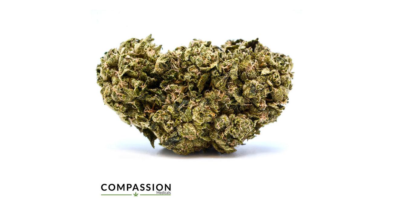 portfolio-compassion-3